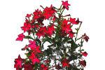 of shrub