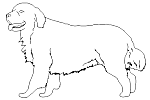 - Dog