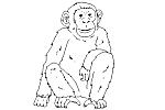 - Primate