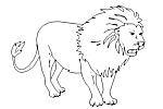 - Felidae
