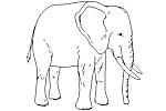 - Elefántido